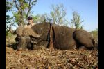 Cape buffalo taken with .50 B&M rifle & CEB projectiles 2007
